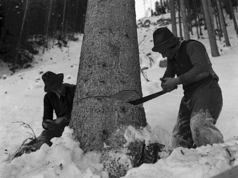 Mondholz Geschichte - Waldarbeiter mit der Zugsäge