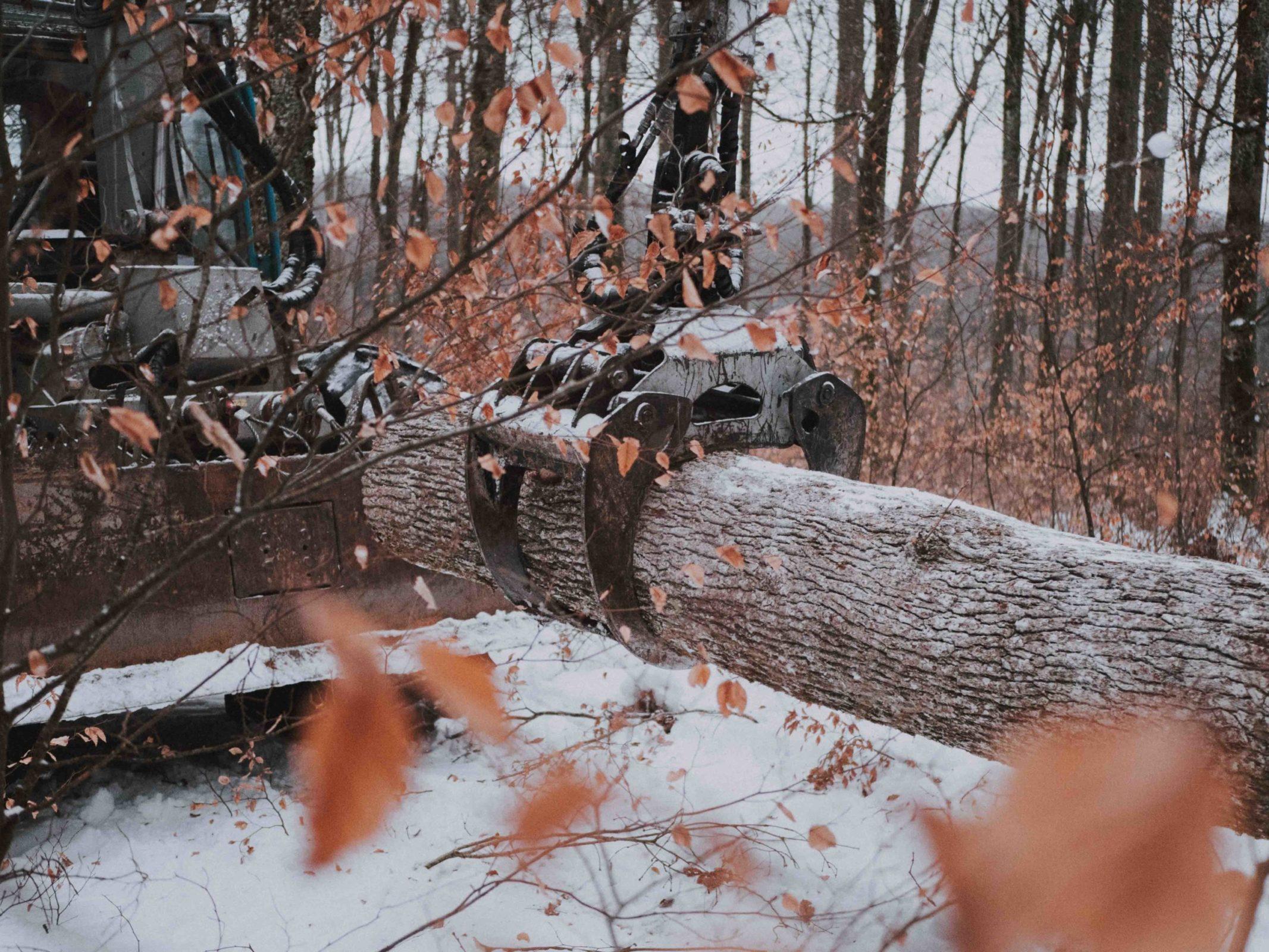 OPA ERWIN Mondholz schlagen Holz schleppen auf Rückegasse im Winter-1